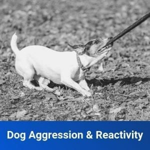 Aggressive Dog Training