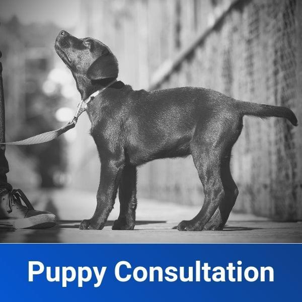 Puppy Training Consultation